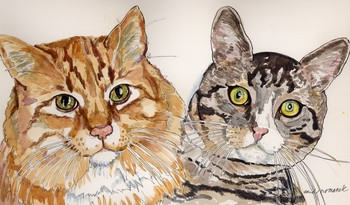 Maine Coon and Tabby